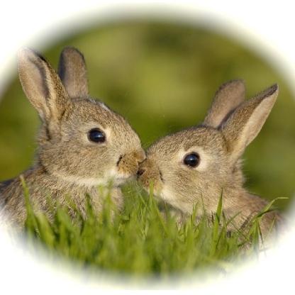rabbit_2a