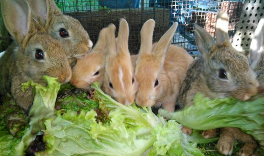 bunny07