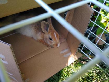 bunny09